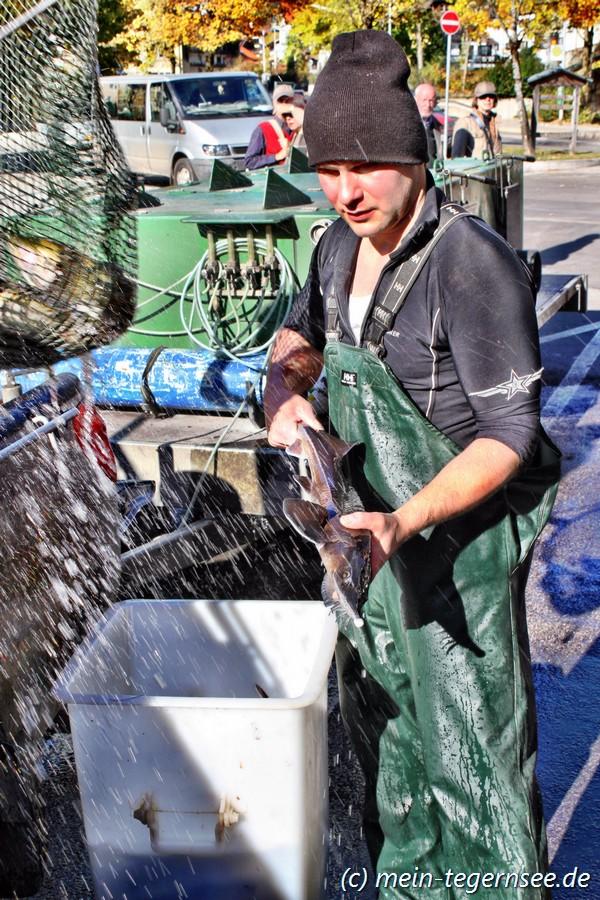 Tegernsee Fischerei