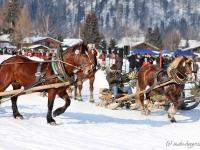 pferdeschlittenrennen-rottach-egern-005