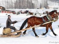 pferdeschlittenrennen-rottach-egern-015