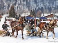 pferdeschlittenrennen-rottach-egern-017