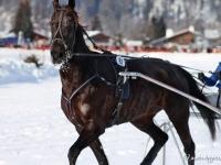 pferdeschlittenrennen-rottach-egern-018