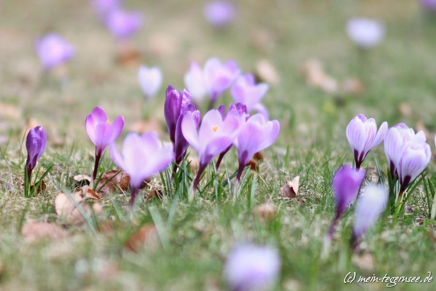 Frühling am Tegernsee