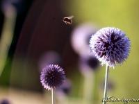 Bienen im Abendlicht