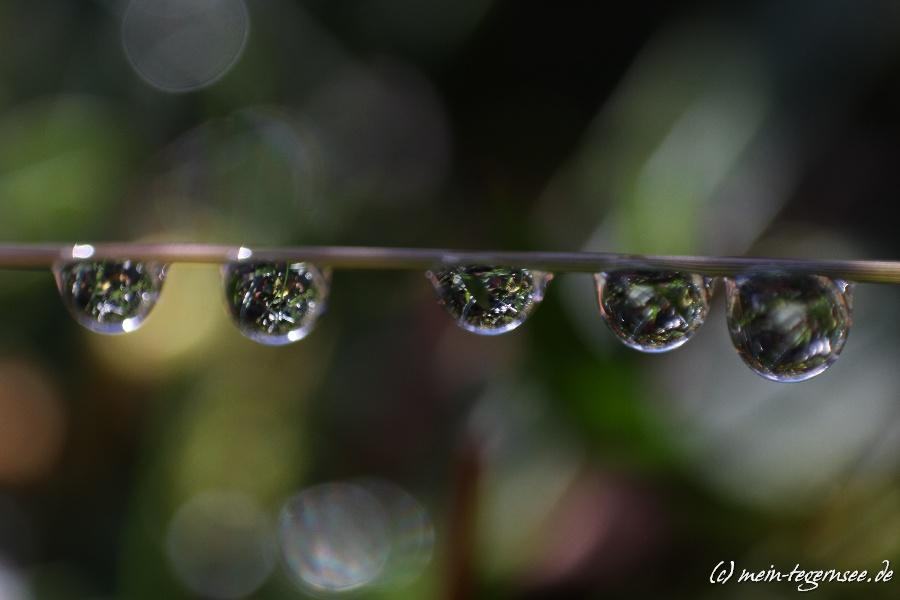 Makrofotografie Wassertropfen und Spinnennetze