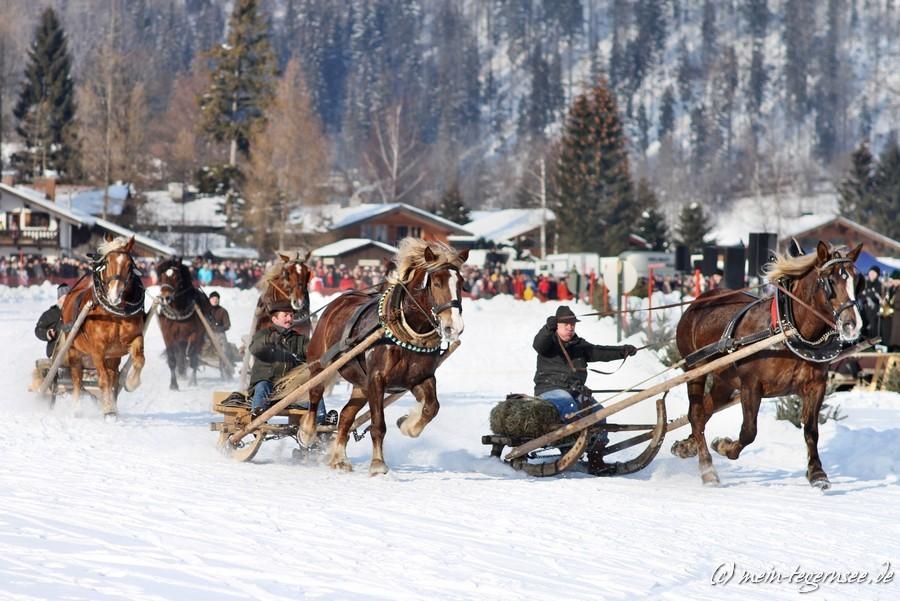 pferdeschlittenrennen-rottach-egern-010