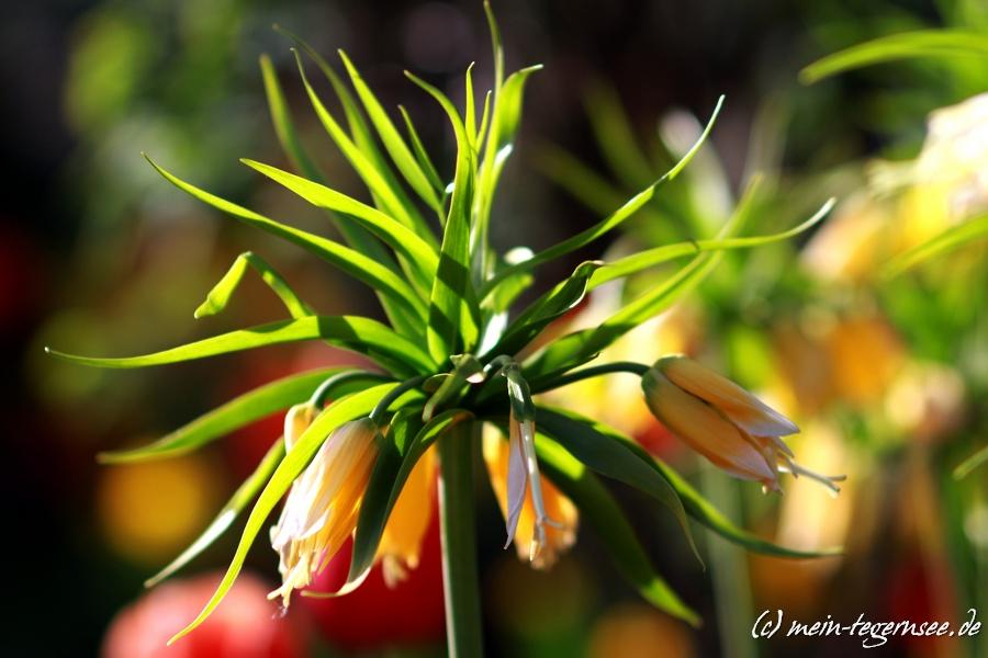 Tegernseer Garten- und Blumentage