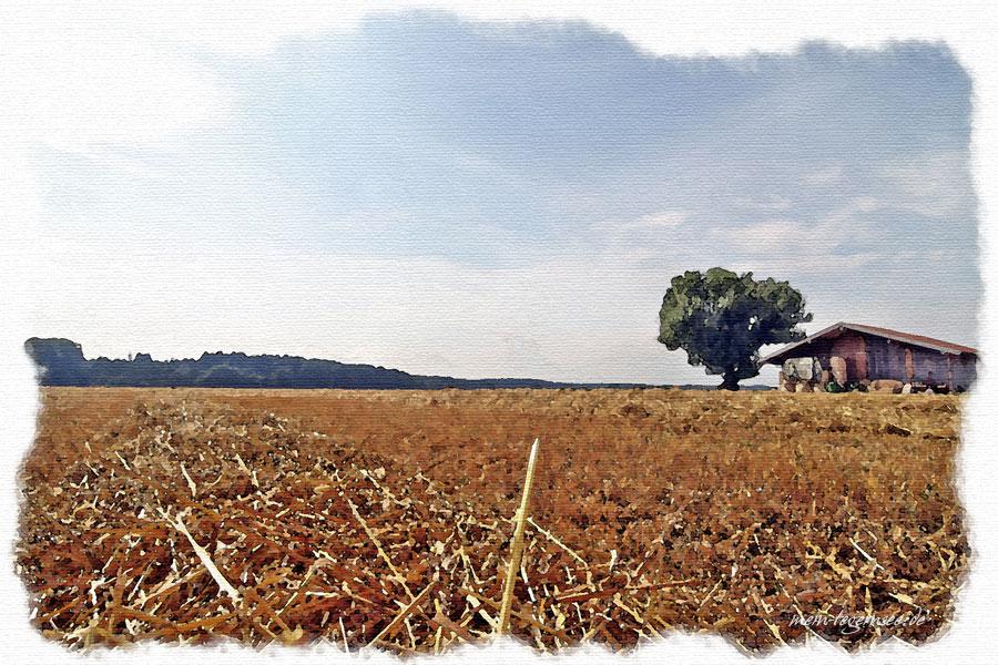 Abgemähtes Feld bei Otterfing.