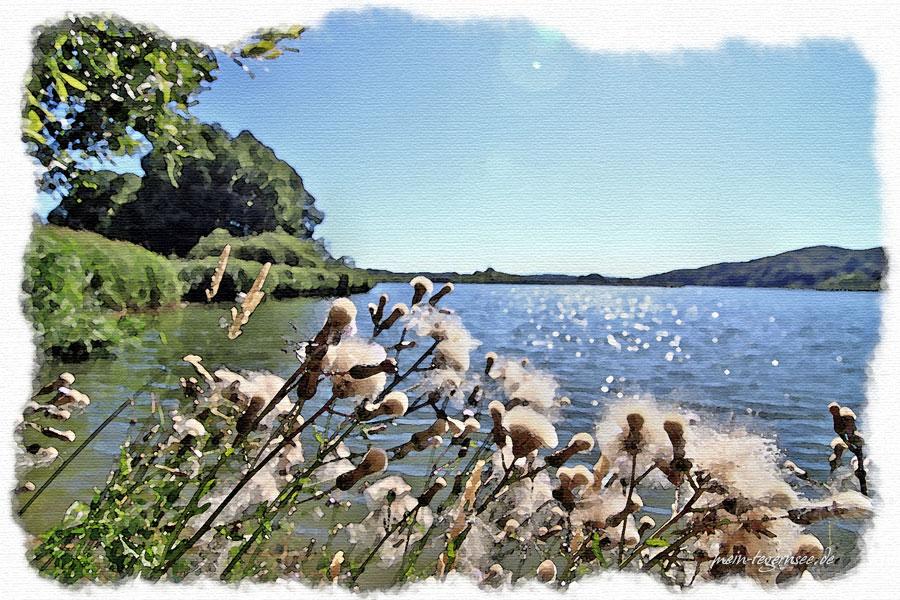 Der Seehamer See vom Westufer.