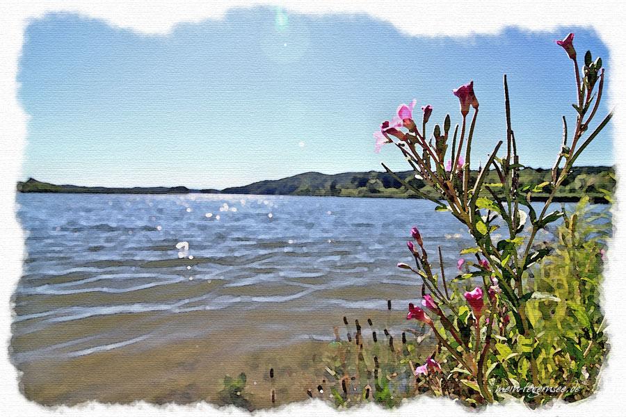 Blick über den Seehamer See Richtung Osten.