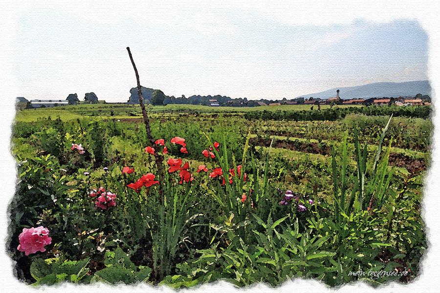 Blick über die Felder von Eva´s Paradiesgarten in Waakirchen.