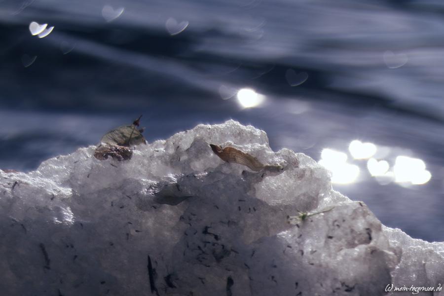 Schaum am Ufer des Tegernsees