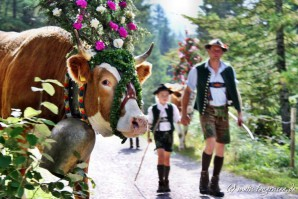 Almabtriebe am Tegernsee – Die Termine 2014