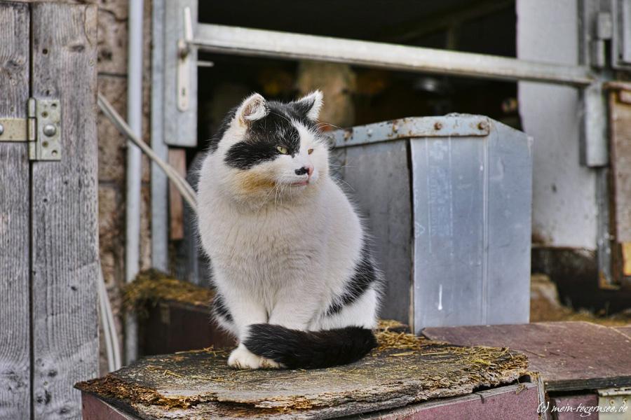 Katze Oberbuchbergerhof