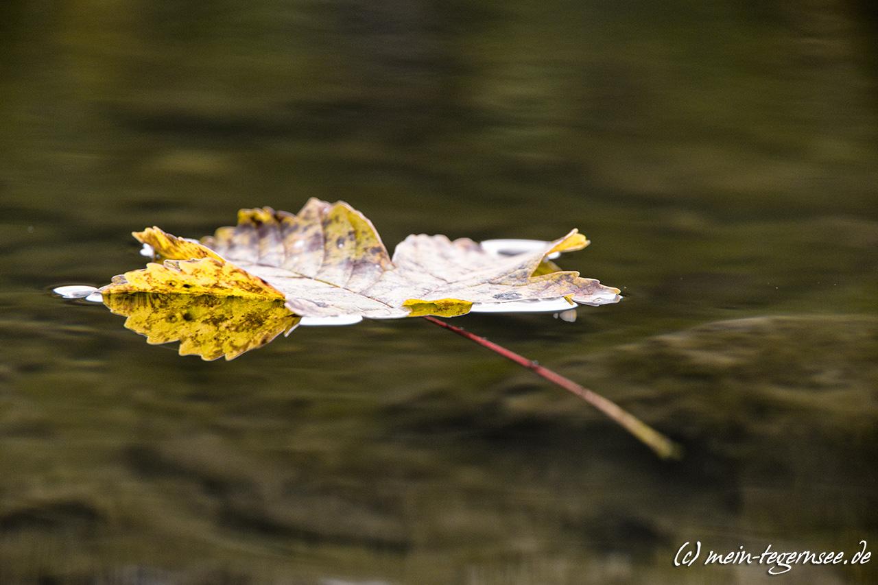 Herbstlaub am Suttensee