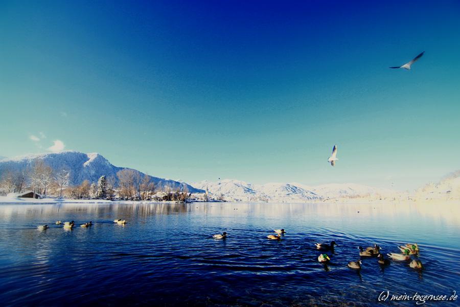 Enten und Möwen genießen die Sonne in der Egerner Bucht
